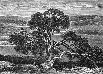 [Abraham's Oak]